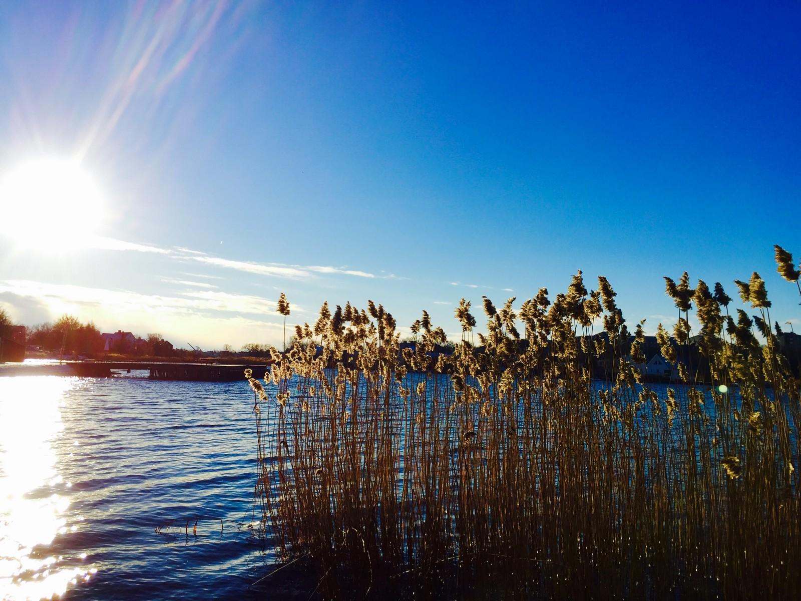 Bidrag 15 – En vacker och kall dag i januari, precis bredvid BTH 2