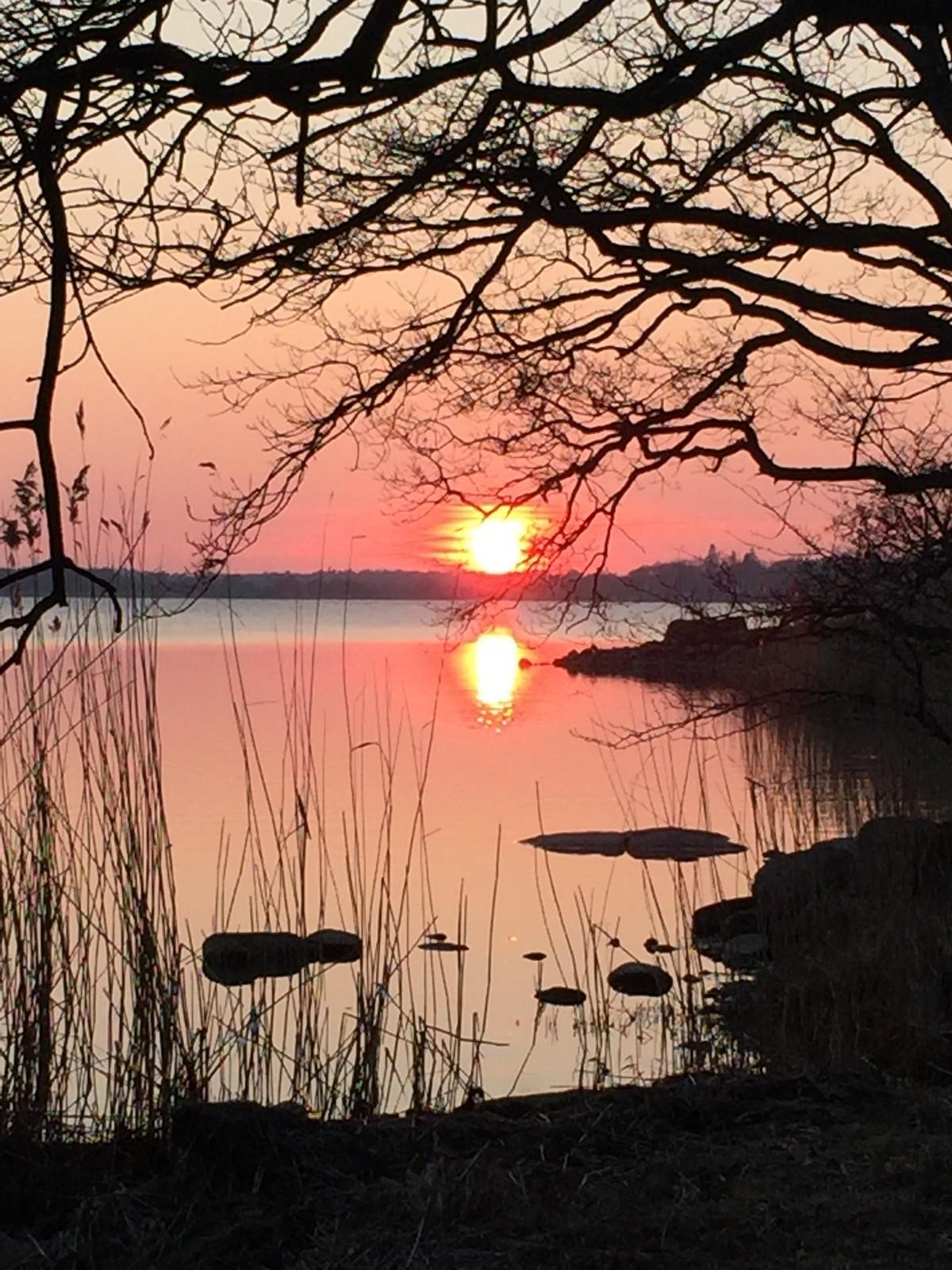 Bidrag 2 - Färgstark solnedgång sett genom träden intill vattnet