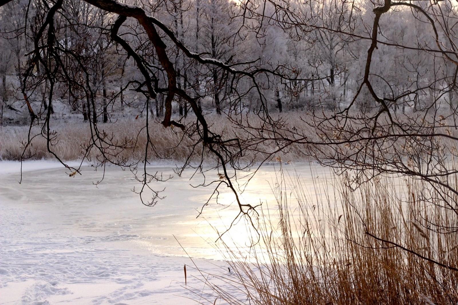 Bidrag 5 - Vinter på Studentviken