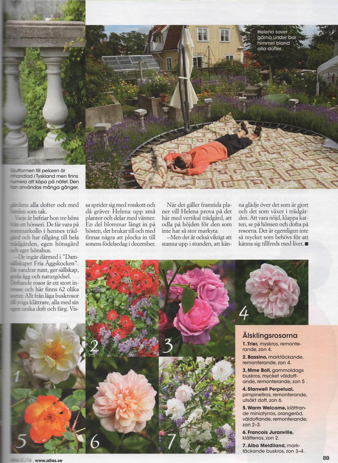 Helena Lindskogs Trädgård Allas nummer 31, 2016, sidan 89.
