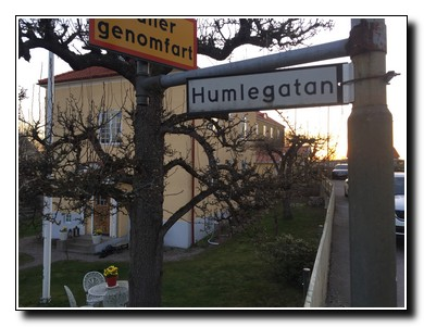 Humlegatan