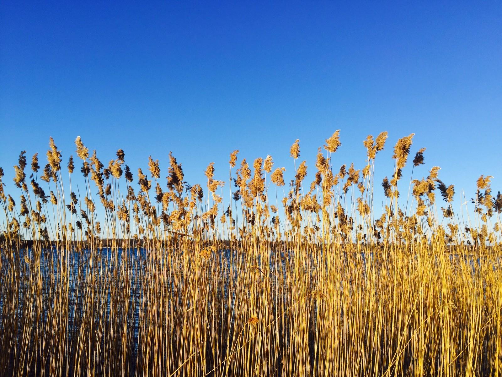 Bidrag 14 – En vacker och kall dag i januari, precis bredvid BTH 1