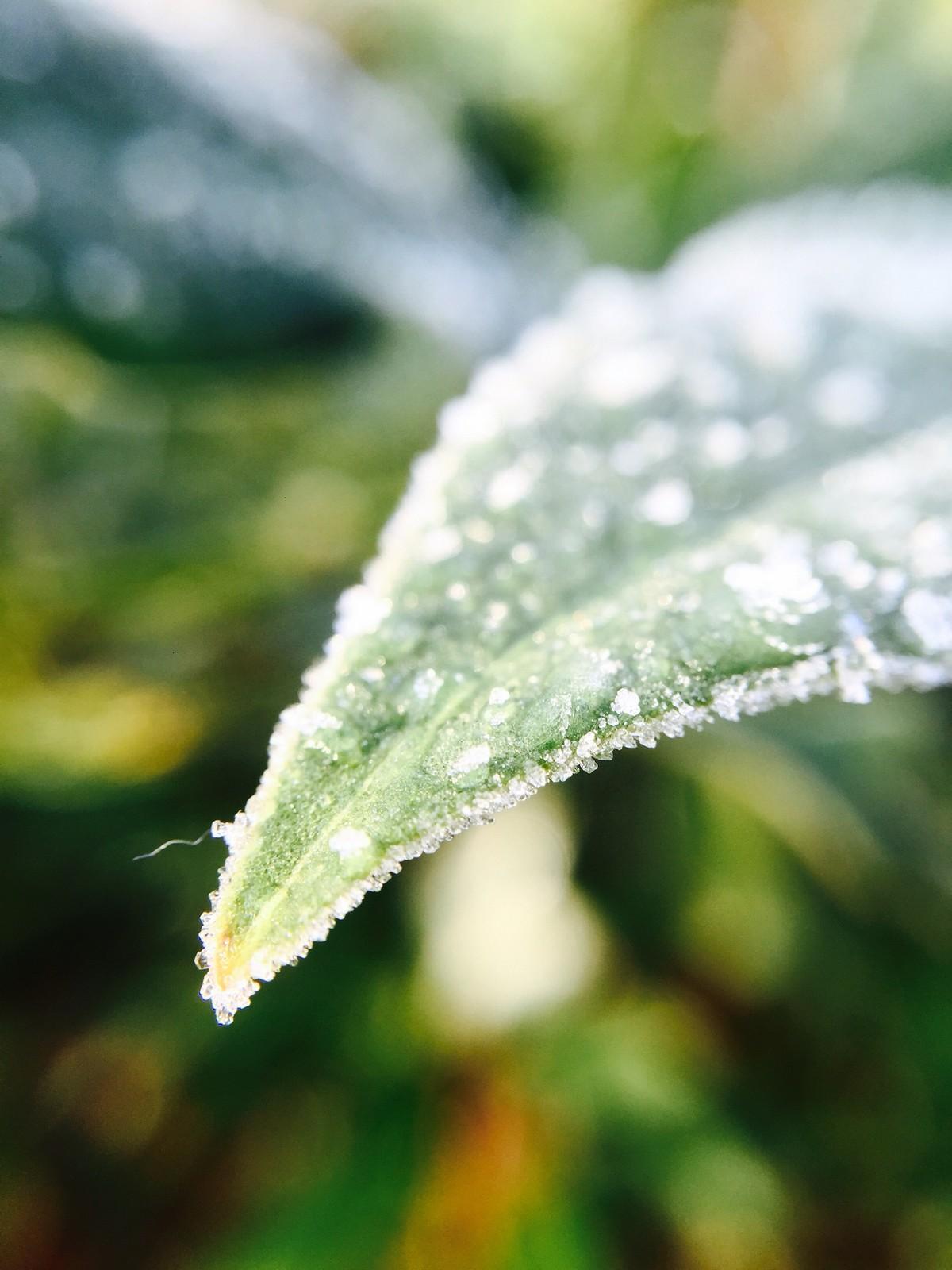 Bidrag 24 – Små, små vattendroppar på ett löv