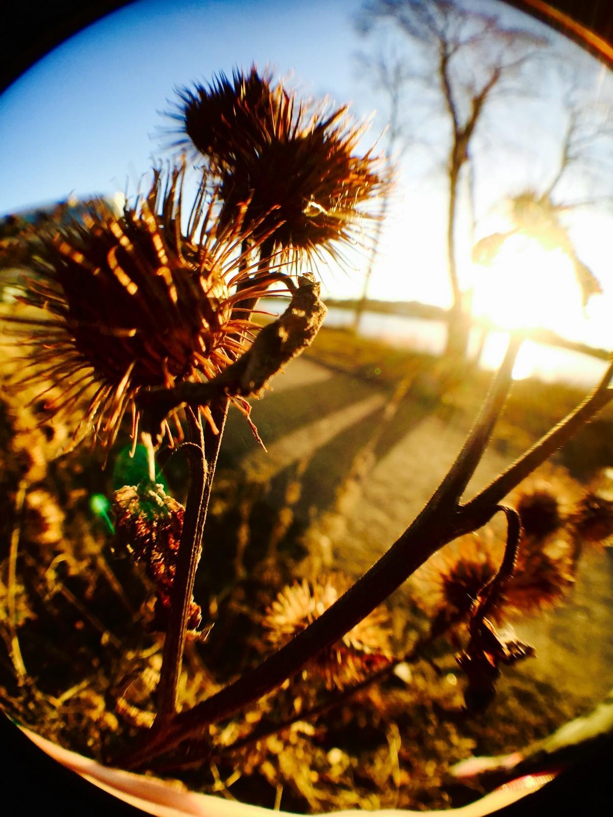 Bidrag 25 – Solnedgång vid BTH